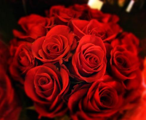 Pohľadnica cervene ruze  -