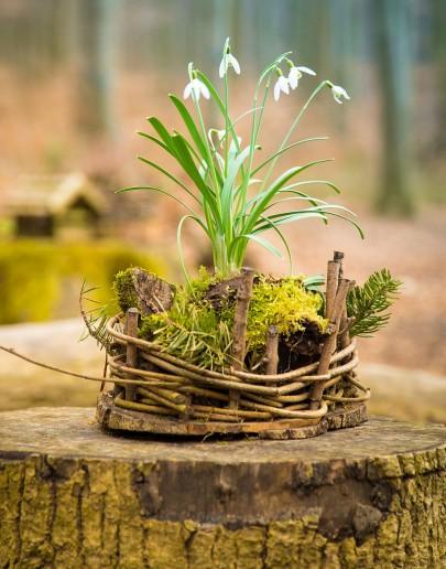 Pohľadnica jar v lese  -