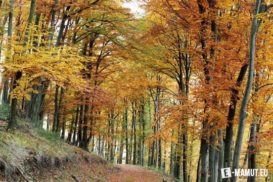 Pohľadnica jesenny les listy stromy  -