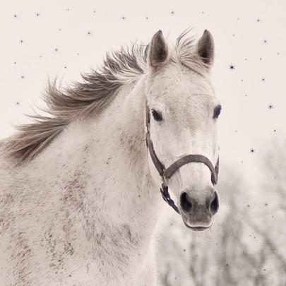 Pohlednice kon zima  -