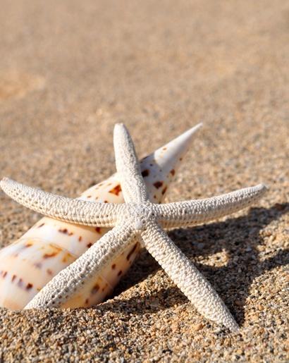 Pohľadnica leto plaz prazdniny dovolenka musle  -