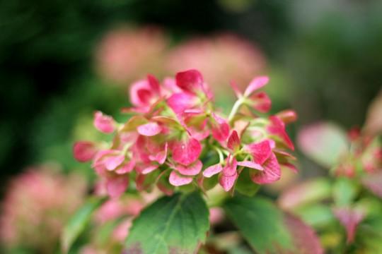 Pohľadnica lucne kvety kytica jesen 02  - k meninám, príležitosti