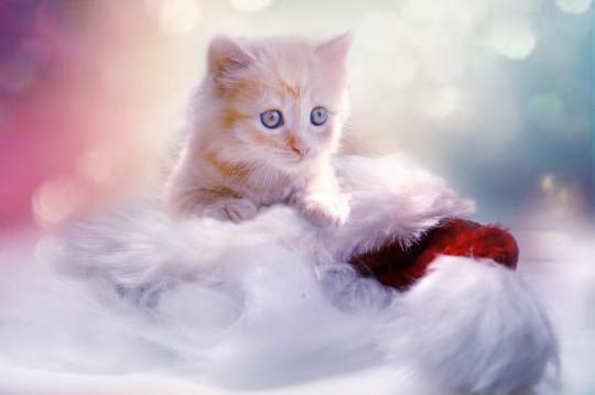 Pohľadnica macka maca Vianoce Mikuláš  -