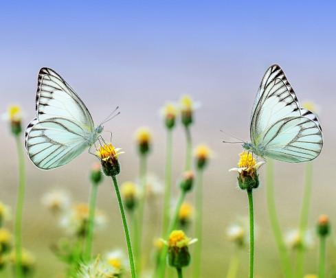 Pohľadnica male zazraky motyle  -