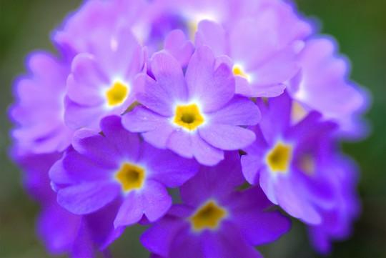 Pohľadnica modra kyticka  -