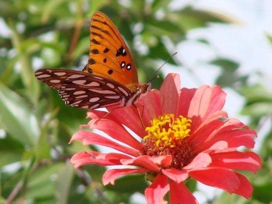 Pohľadnica motyl 006  -