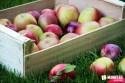 jesen-uroda-rocne-obdobia-ovocie-jablka-01.jpg