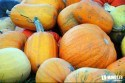 jesen-uroda-rocne-obdobia-tekvice-halloween-01.jpg