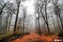 jesenny_les_hmla_listy.jpg