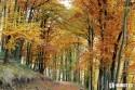 jesenny_les_listy_stromy.JPG
