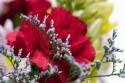 kvety_014.jpg