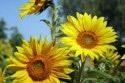 kvety_02.jpg