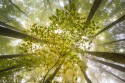 les_stromy_krasa.jpg