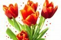 priroda_pohladnica_jar_kvety_tulipany.jpg