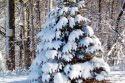 vianocny-stromcek_005.jpg