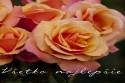 vsetko_najlepsie_k_narodeninam_meninam_kytica_ruze_043.jpg