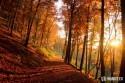 zapad_slnka_v_jesennom_lese.JPG