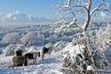 zima_rozpravka_sneh_kone.jpg