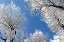 zima_srien_inovat__namraza_stromy.JPG