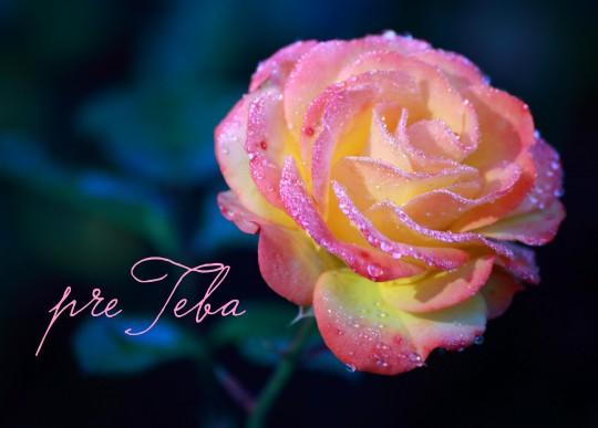 Pohľadnica ruza z lásky pre teba  -