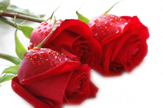 Pohľadnica ruzicky z lásky  - k meninám, príležitosti
