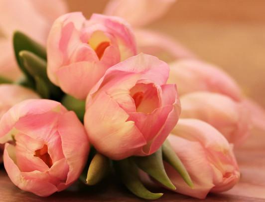 Pohľadnica ruzove tulipany  -