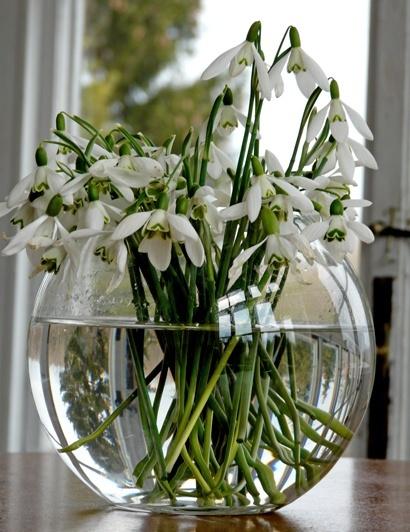 Pohľadnica snezienky kytica jar  -