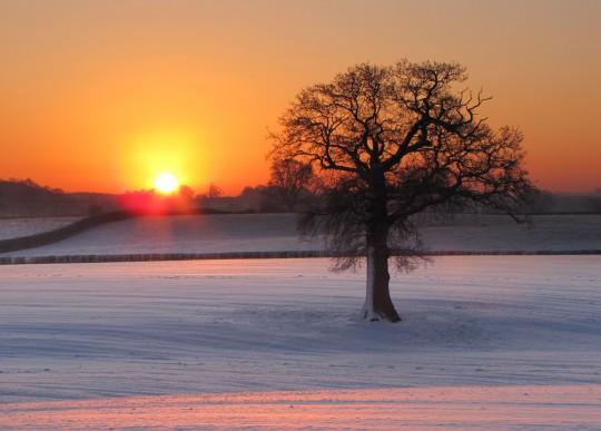 Pohľadnica strom zimne rano  -