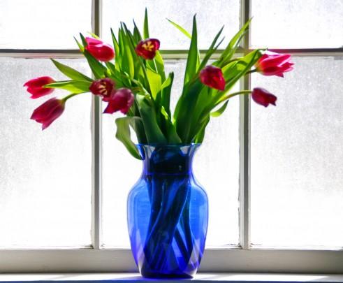 Pohľadnica tulipanove rano  -