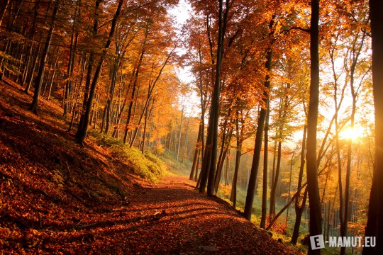 Pohľadnica zapad slnka v jesennom lese  -