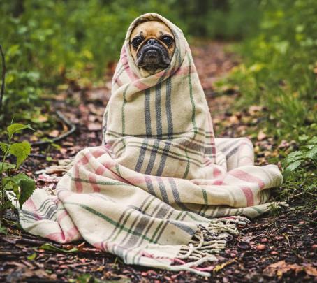 Pohľadnica zima psik  -