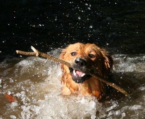 Postcard zvierata pes psy  -