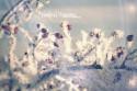 Vaše pohľadnice (cimg8332--vianoce2018_553856.JPG)