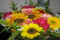 Vaše pohľadnice (kvety-od-andy_448550.jpg)
