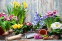Vaše pohľadnice (zahrada_jarne_kvety_444510.jpg)